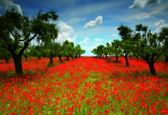 Poppy Field, 1000 brikker (1)